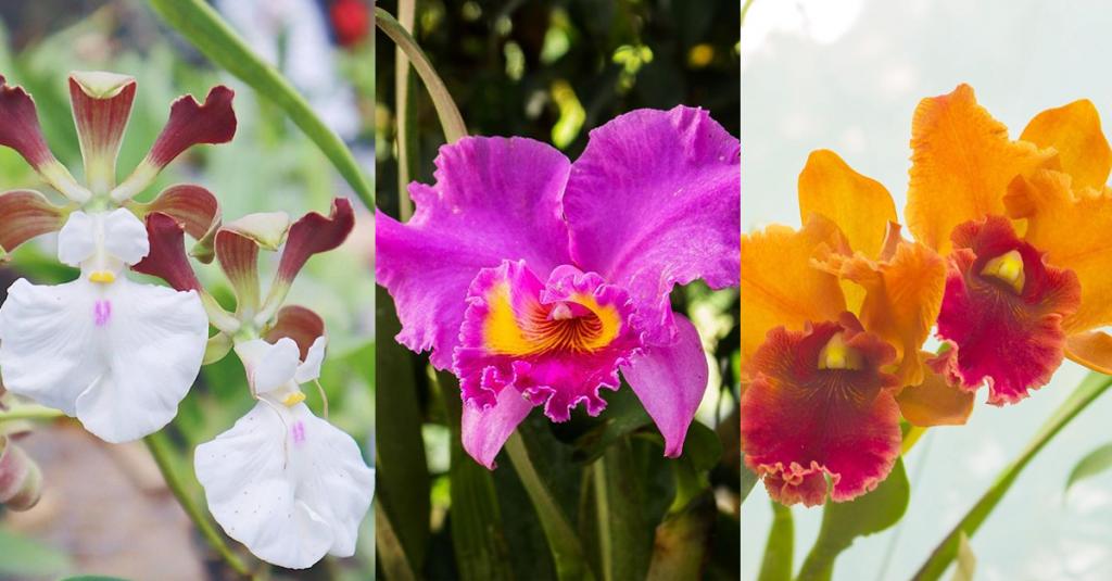 orchids-casa-de-anny
